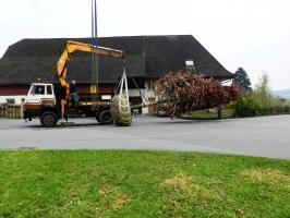 pflanzung-eiche-005